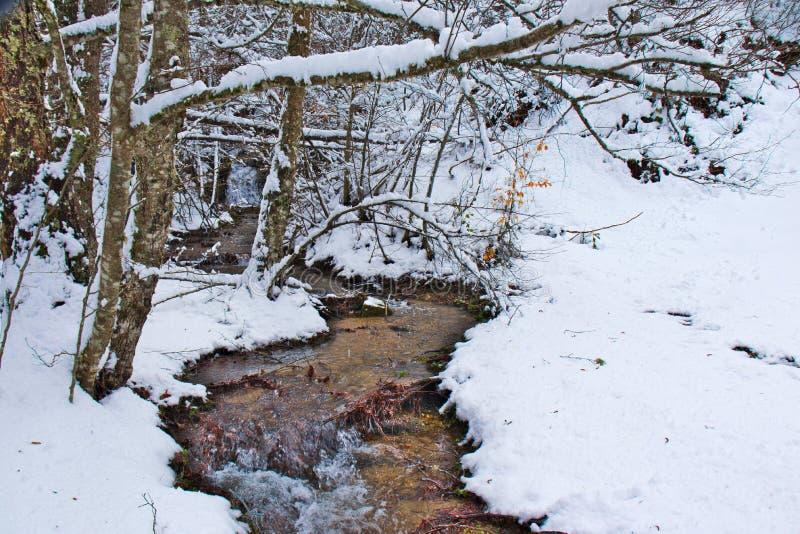 Χιονώδες δάσος οξιών και πεύκων στα τέλη του χειμώνα, εθνικό πάρκο Sila, Καλαβρία, νότια Ιταλία στοκ φωτογραφία