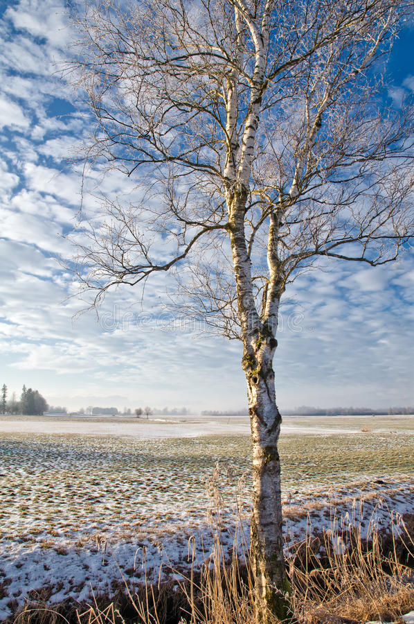 χιονώδες δέντρο τοπίων σημύ στοκ φωτογραφίες με δικαίωμα ελεύθερης χρήσης