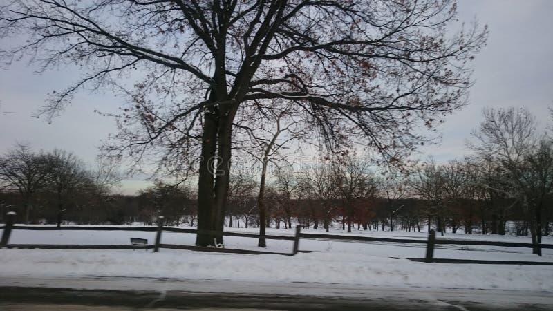 Χιονώδες πάρκο στοκ εικόνες