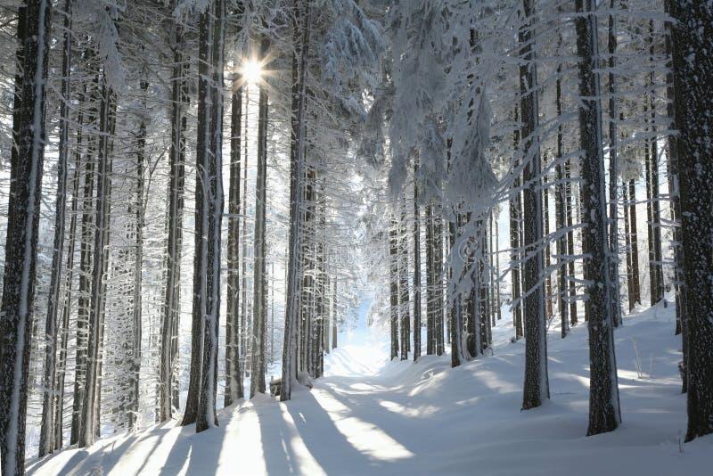 Χιονώδες χειμερινό δάσος αναμμένο από τον ήλιο πρωινού στοκ φωτογραφία με δικαίωμα ελεύθερης χρήσης