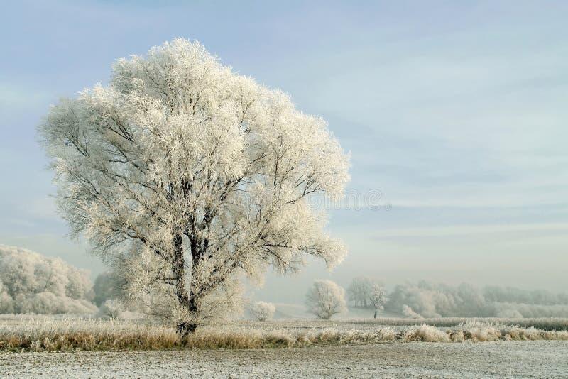 χιονώδες χειμερινό τοπίο με το παγωμένο δέντρο στοκ εικόνα με δικαίωμα ελεύθερης χρήσης