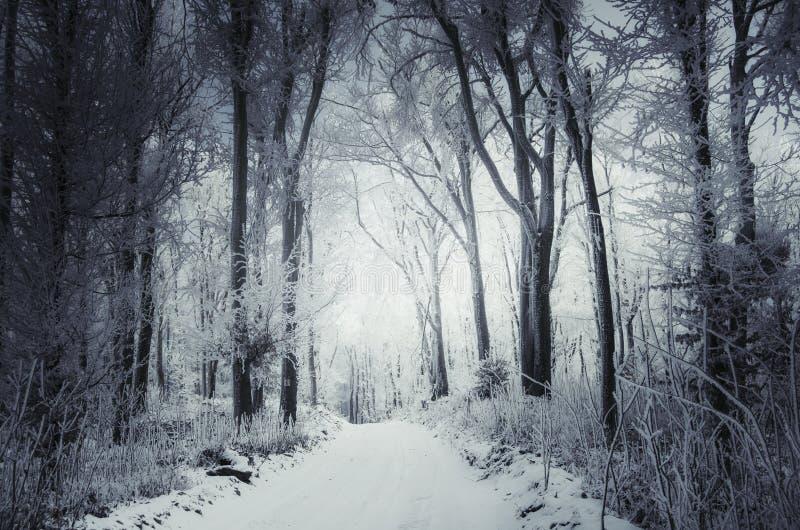 Χιονώδης χειμερινός δρόμος μέσω των ξύλων στοκ φωτογραφία