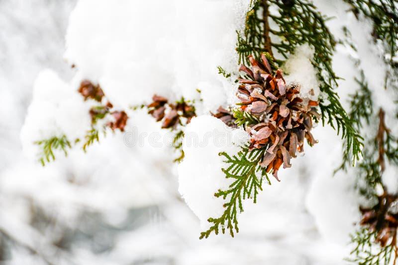 Χιονώδης χειμώνας στοκ φωτογραφία με δικαίωμα ελεύθερης χρήσης