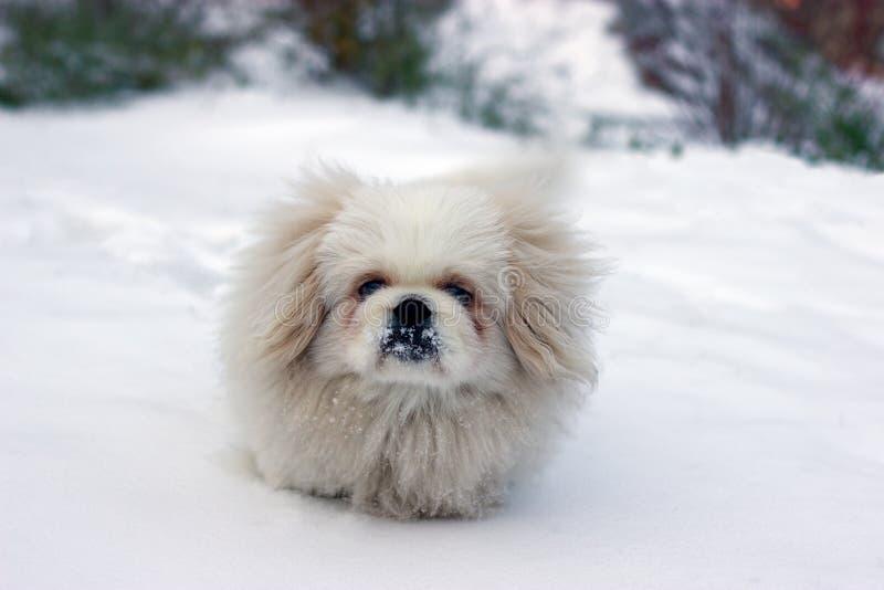χιονώδης στοκ φωτογραφίες με δικαίωμα ελεύθερης χρήσης