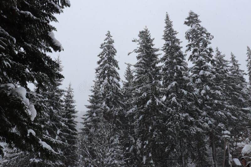 χιονώδη δέντρα βουνών στοκ φωτογραφία με δικαίωμα ελεύθερης χρήσης