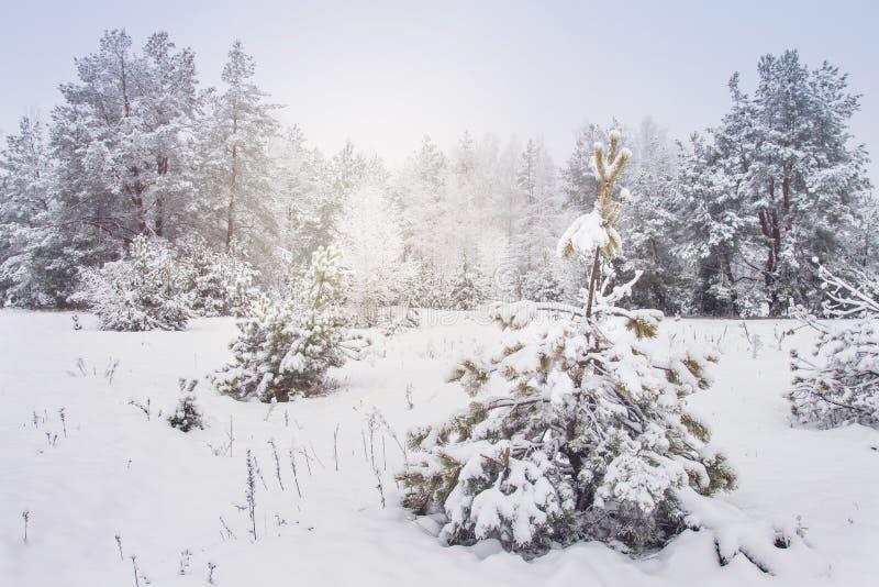 Χιονώδη δέντρα στη χειμερινή δασική νεφελώδη ημέρα στο παγωμένο δασικό άσπρο χιόνι στα δέντρα και τις εγκαταστάσεις χιονοπτώσεις  στοκ εικόνα με δικαίωμα ελεύθερης χρήσης