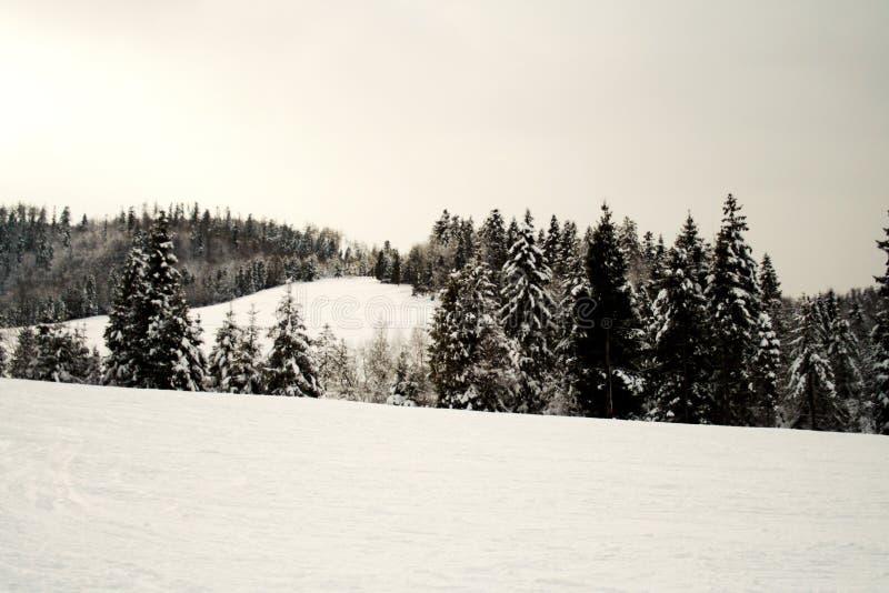 Χιονώδη δέντρα το Φεβρουάριο στοκ εικόνες