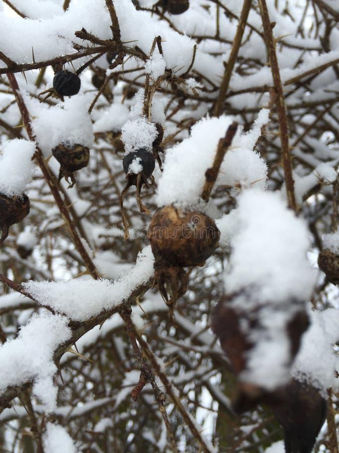 Χιονώδη μούρα στοκ φωτογραφίες με δικαίωμα ελεύθερης χρήσης