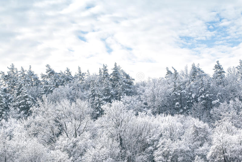 Χιονώδεις πεύκα και ουρανός με τα σύννεφα στοκ εικόνα με δικαίωμα ελεύθερης χρήσης