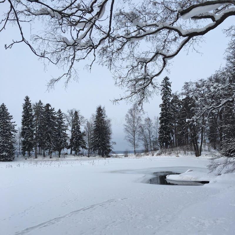 Χιονώδες δάσος στοκ φωτογραφία με δικαίωμα ελεύθερης χρήσης
