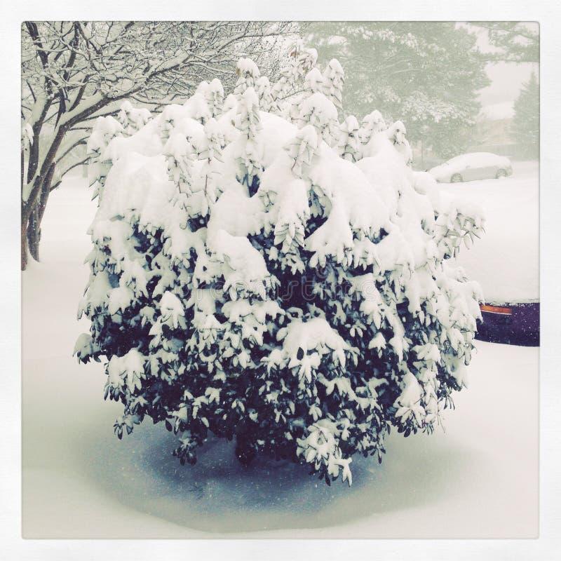 Χιονώδης θάμνος στοκ εικόνα με δικαίωμα ελεύθερης χρήσης