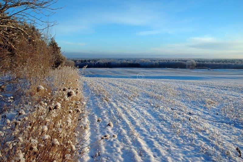 Χιονώδης διαστιγμένος τομέας στο χειμώνα στοκ φωτογραφίες με δικαίωμα ελεύθερης χρήσης