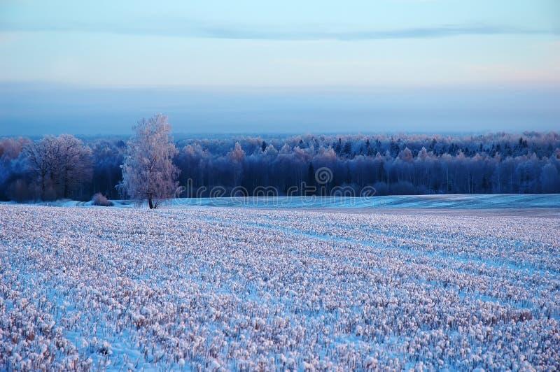 Χιονώδης διαστιγμένος τομέας στο χειμώνα στοκ φωτογραφία με δικαίωμα ελεύθερης χρήσης
