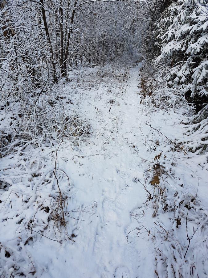 Χιονώδης περίπατος στοκ φωτογραφίες