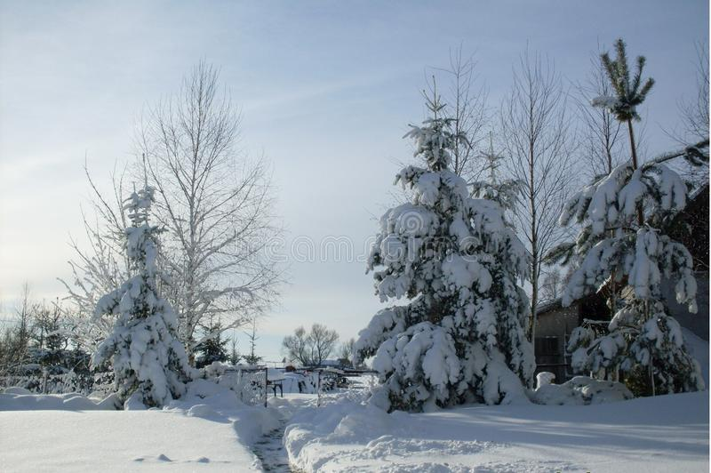 χιονώδης χειμώνας κήπων σχεδίου ομορφιάς ανασκόπησής σας στοκ εικόνα