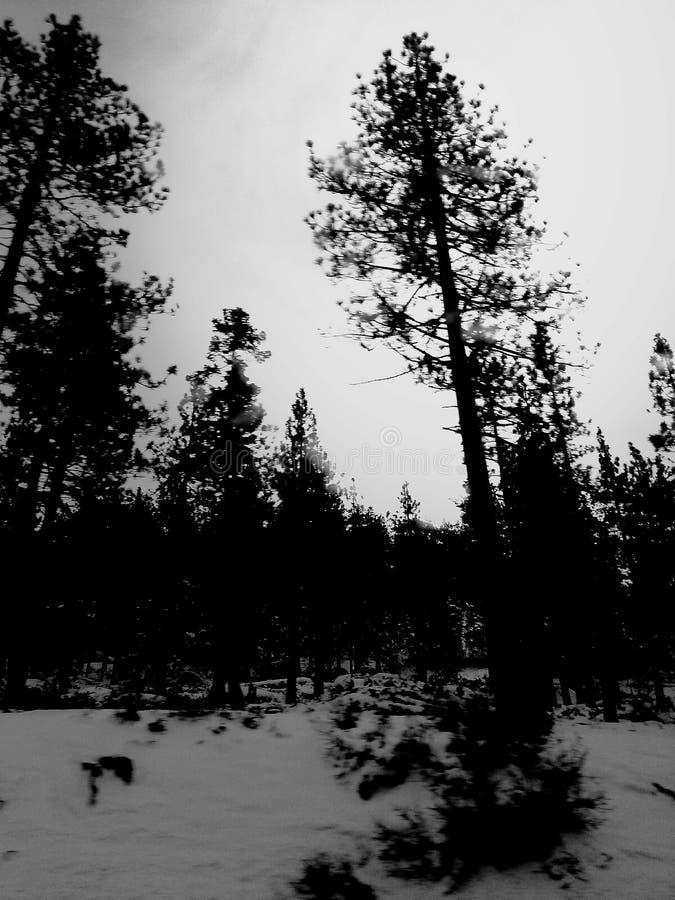 Χιόνι & δέντρα στοκ εικόνες