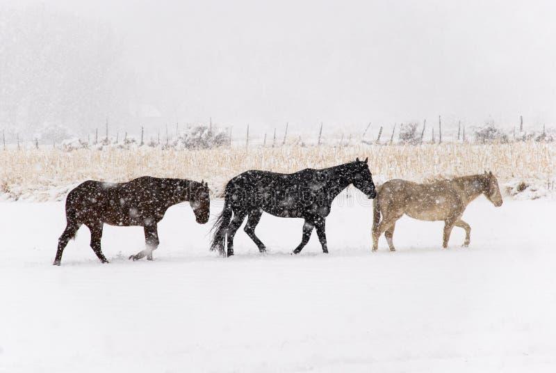 χιόνι αλόγων trudge στοκ φωτογραφία με δικαίωμα ελεύθερης χρήσης