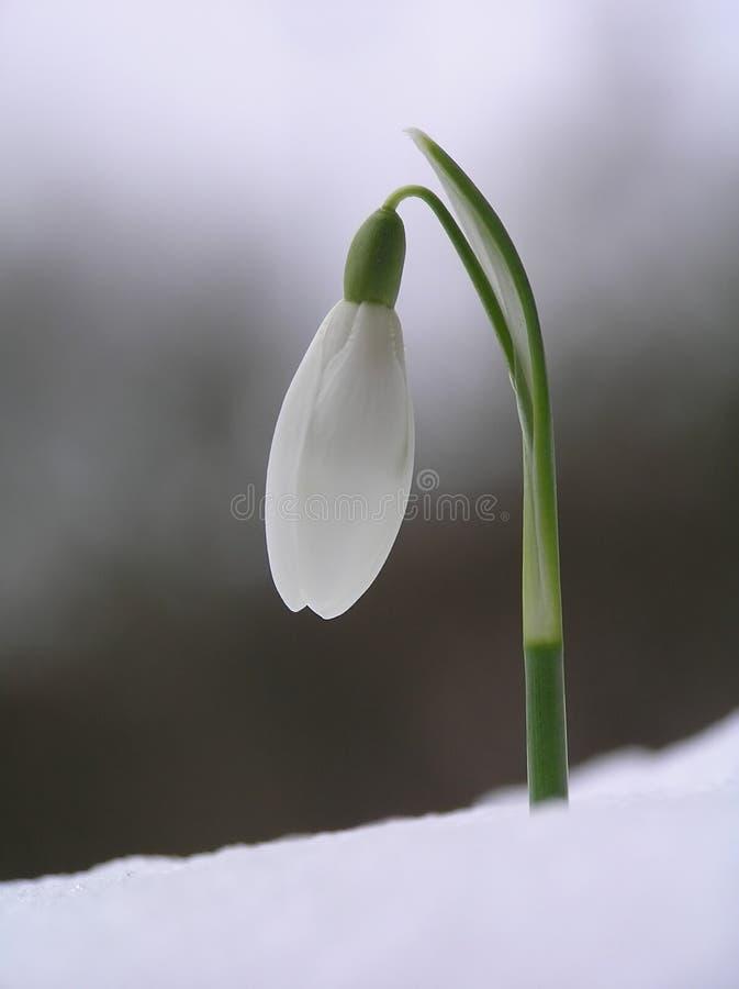 χιόνι απελευθέρωσης στοκ εικόνα