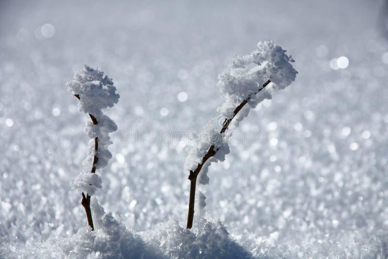 χιόνι δύο κλάδων στοκ εικόνες