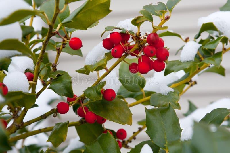 χιόνι ελαιόπρινου στοκ εικόνες με δικαίωμα ελεύθερης χρήσης