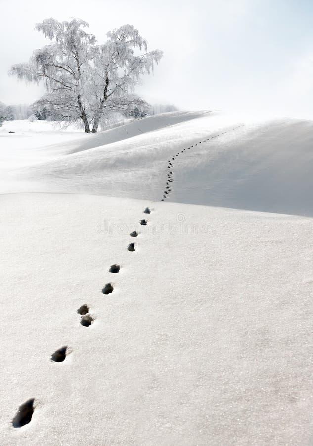 χιόνι ιχνών στοκ φωτογραφίες