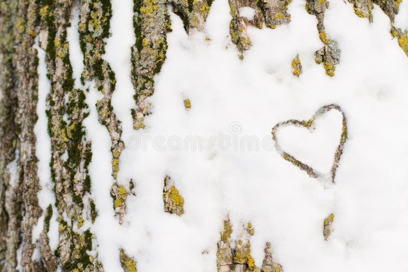Χιόνι καρδιών σε έναν φλοιό δέντρων στοκ εικόνες με δικαίωμα ελεύθερης χρήσης