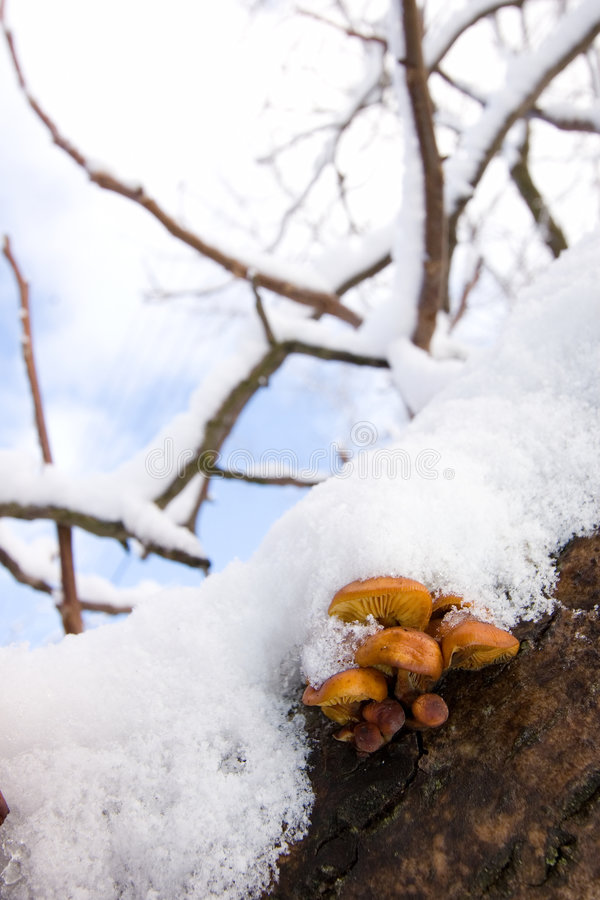 χιόνι μανιταριών κάτω στοκ εικόνα με δικαίωμα ελεύθερης χρήσης