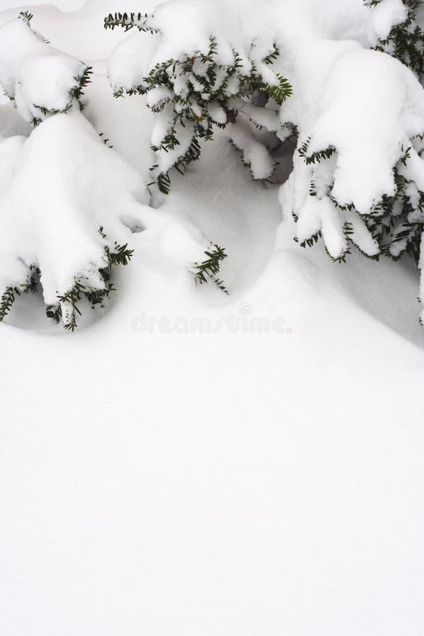 χιόνι πεύκων πλαισίων κλάδων στοκ φωτογραφία με δικαίωμα ελεύθερης χρήσης