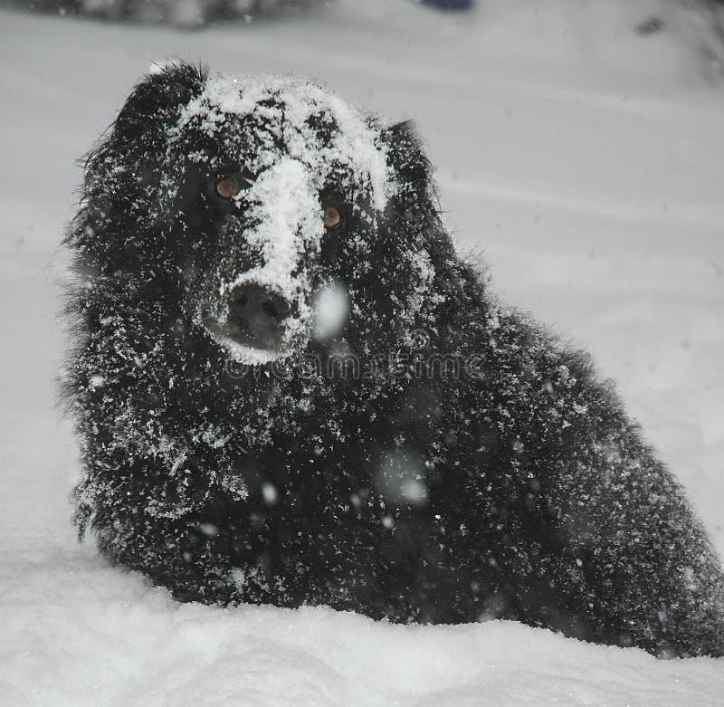 χιόνι σκυλιών στοκ εικόνες με δικαίωμα ελεύθερης χρήσης