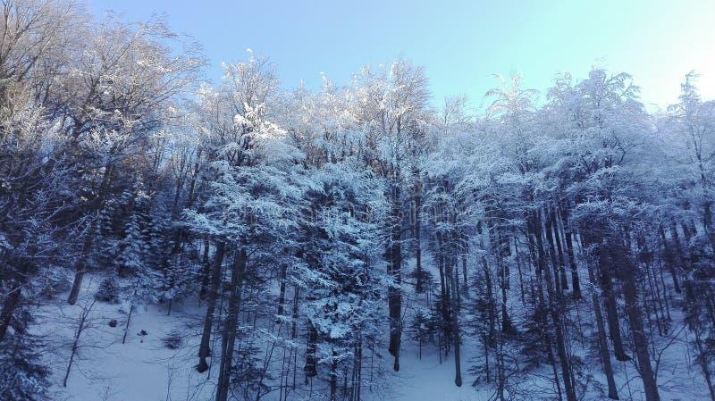 Χιόνι στα δέντρα στοκ εικόνα