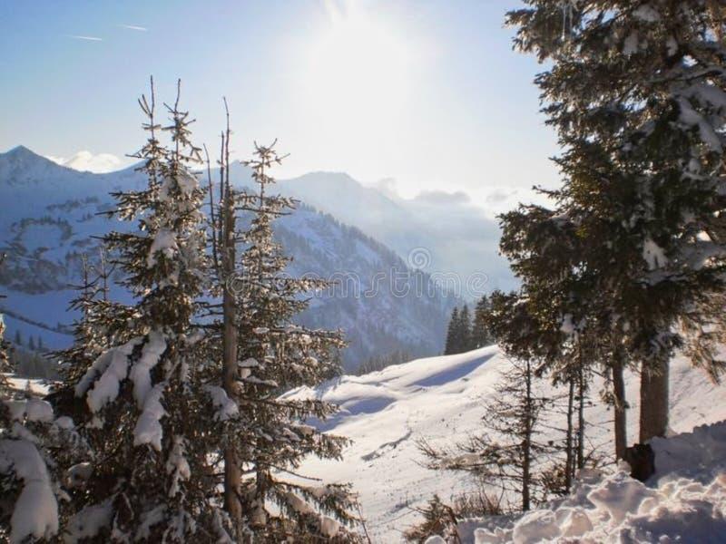 χιόνι στα βουνά με τα δέντρα στοκ εικόνα