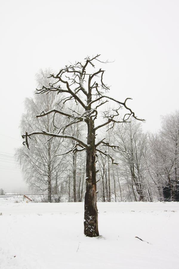 Χιόνι στους κλάδους δέντρων στο υπόβαθρο χειμερινού ουρανού στοκ φωτογραφία