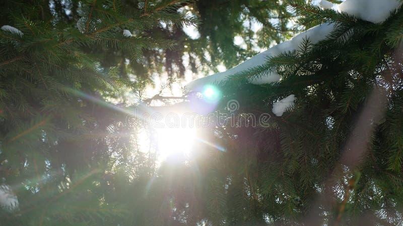 Χιόνι φύσης δέντρων χειμερινού έλατου στους κλάδους του κομψού έντονου φωτός ήλιων τοπίων στοκ φωτογραφία με δικαίωμα ελεύθερης χρήσης
