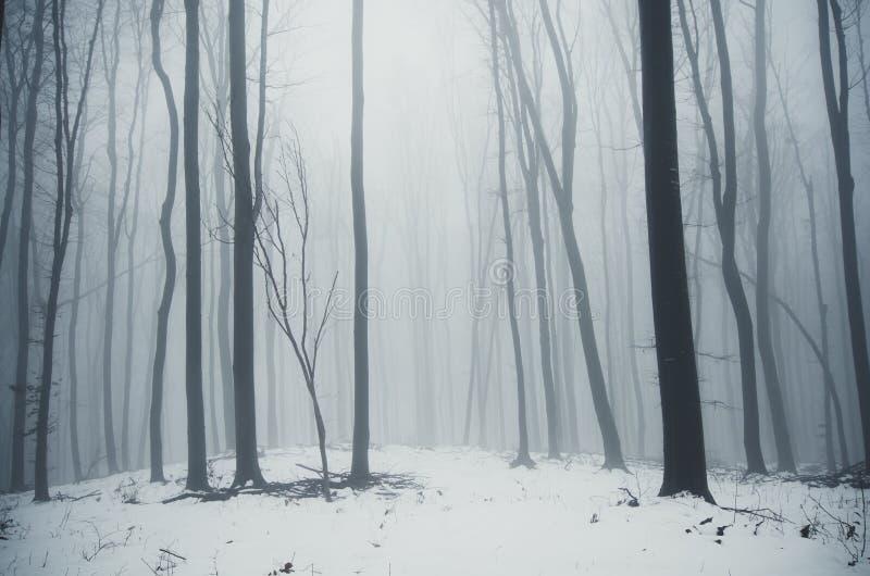 Χιόνι χειμερινών ξύλων στοκ εικόνα