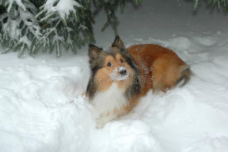 χιόνι 4 σκυλιών στοκ φωτογραφίες με δικαίωμα ελεύθερης χρήσης