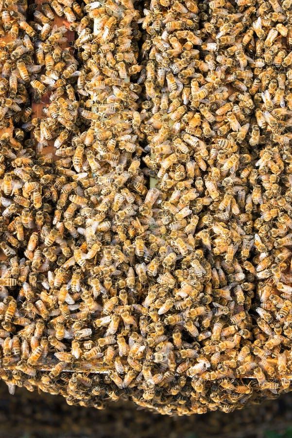 Χιλιάδες μέλισσες στοκ φωτογραφίες
