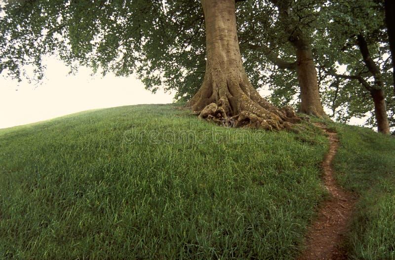 χλοώδες δέντρο λόφων στοκ φωτογραφία με δικαίωμα ελεύθερης χρήσης