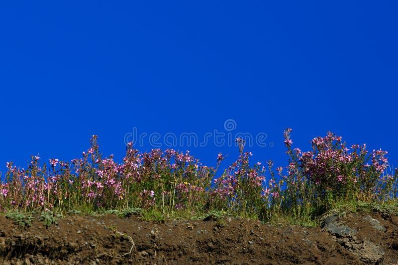 Χλωρίδα στην κλίση του υποστηρίγματος Elbrus στο βόρειο Καύκασο στοκ εικόνες με δικαίωμα ελεύθερης χρήσης