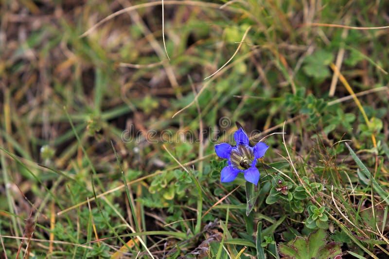 Χλωρίδα στην κλίση του υποστηρίγματος Elbrus στο βόρειο Καύκασο στοκ φωτογραφίες με δικαίωμα ελεύθερης χρήσης