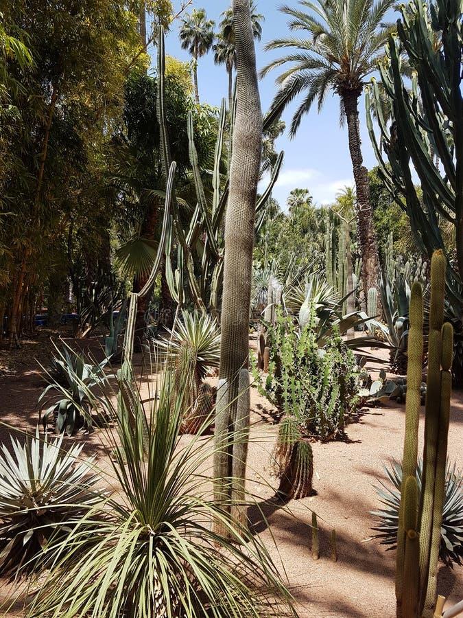 Χλωρίδα του κήπου Majorelle στο Μαρακές στοκ εικόνα με δικαίωμα ελεύθερης χρήσης