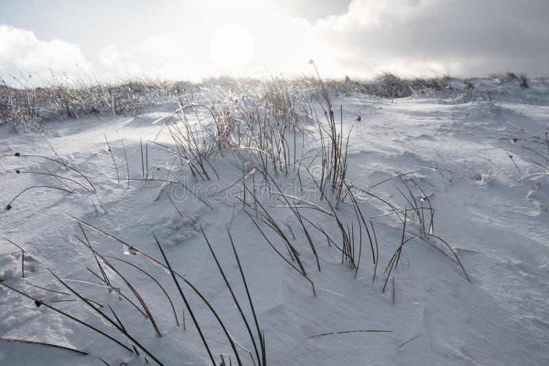 Χλόη ακριβώς που παρουσιάζει επάνω από το βαθύ χιόνι στοκ εικόνες