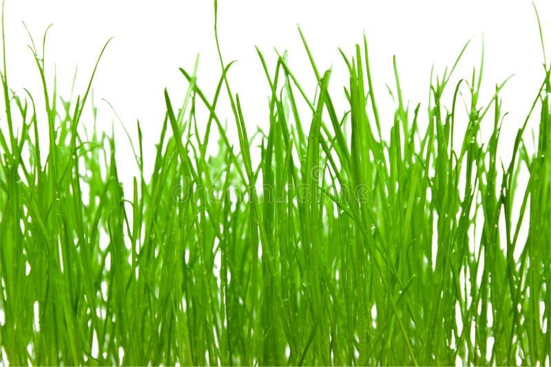 χλόη ανασκόπησης πράσινη στοκ φωτογραφίες με δικαίωμα ελεύθερης χρήσης