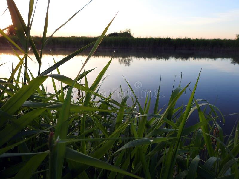 Χλόη με τη δροσιά πρωινού κοντά στον ποταμό το πρωί, Λιθουανία στοκ φωτογραφία με δικαίωμα ελεύθερης χρήσης