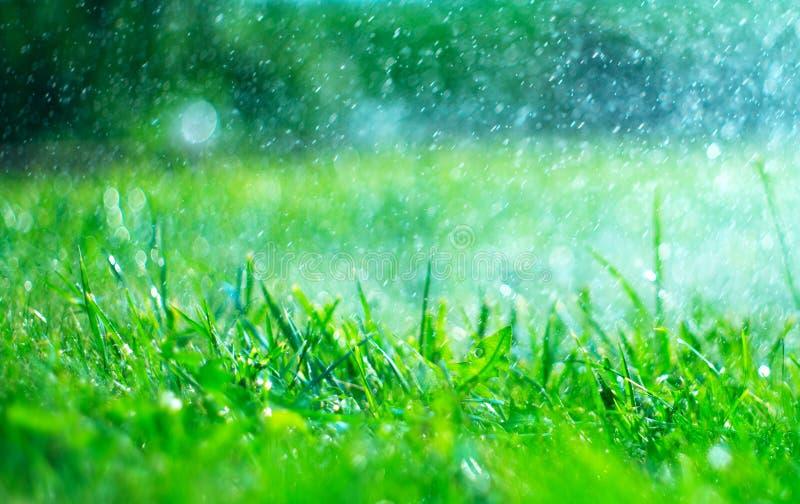 Χλόη με τις απελευθερώσεις βροχής Ποτίζοντας χορτοτάπητας βροχή Θολωμένο πράσινο υπόβαθρο χλόης με την κινηματογράφηση σε πρώτο π στοκ εικόνες