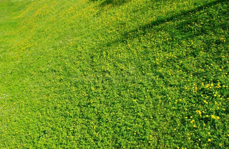 χλόη πεδίων πράσινη στοκ εικόνα