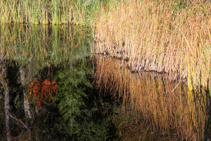 Χλόη που απεικονίζεται σε μια λίμνη στοκ εικόνα με δικαίωμα ελεύθερης χρήσης