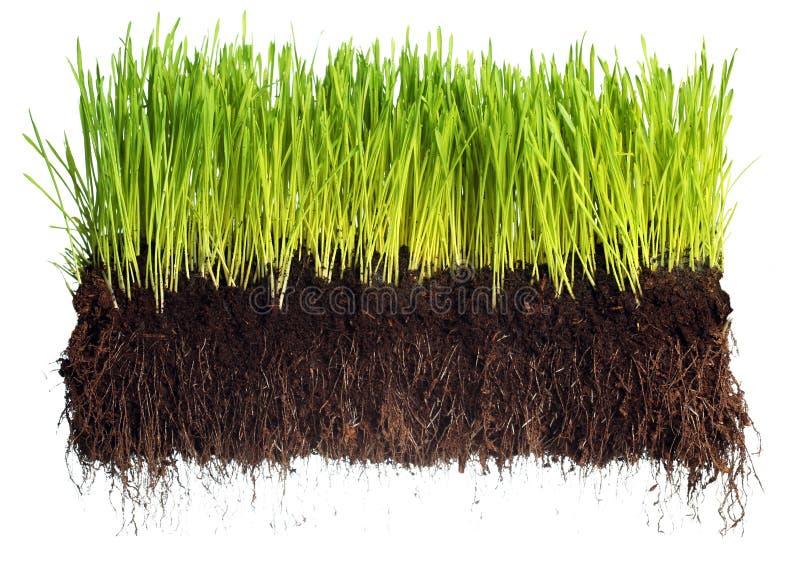 χλόη πράσινη στοκ φωτογραφία με δικαίωμα ελεύθερης χρήσης