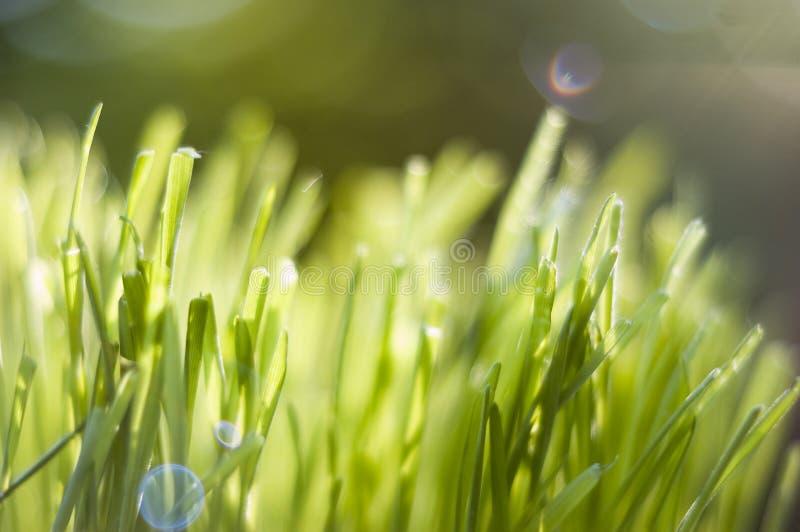 χλόη πράσινη στοκ εικόνα