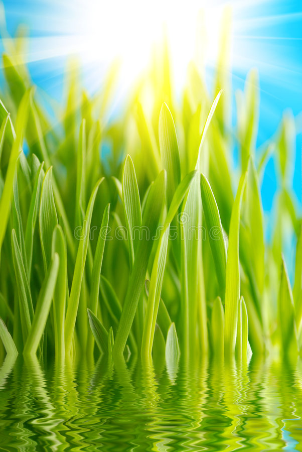 χλόη πράσινη στοκ εικόνες με δικαίωμα ελεύθερης χρήσης