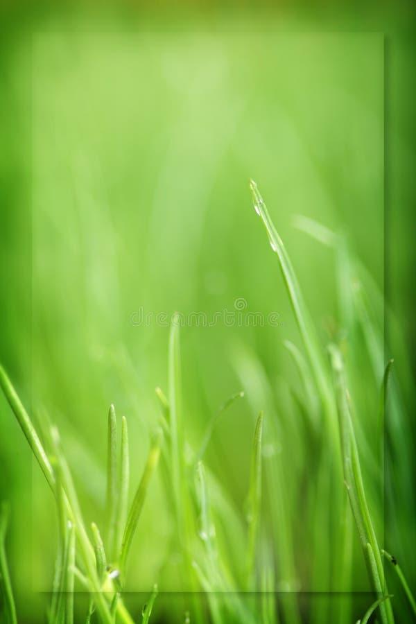 χλόη πράσινη στοκ φωτογραφίες με δικαίωμα ελεύθερης χρήσης